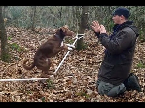 Amazing Acrobatic Dog – Slackline