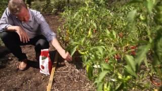 Edible Gardening Best Practices