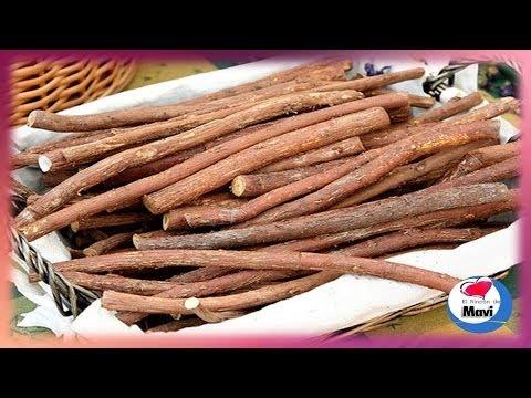Propiedades y beneficios del regaliz planta medicinal