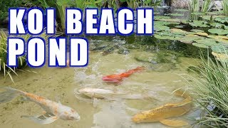 Koi Pond With A Beach!!  Greg Wittstock, The Pond Guy
