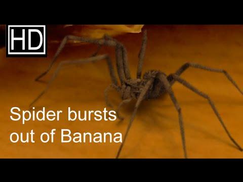 the ovipositor