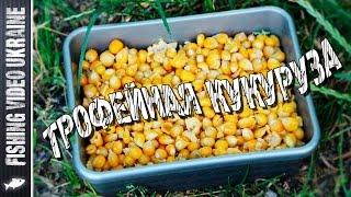 Прикормка из кукурузы для сазана своими руками