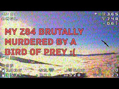 my-z84-brutally-murdered-by-a-bird-of-prey-