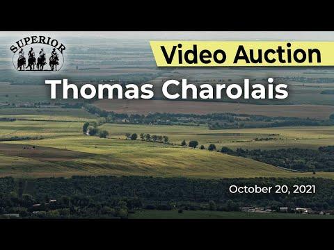 Thomas Charolais