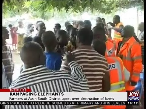 Rampaging Elephants - The Pulse on JoyNews (5-10-18)