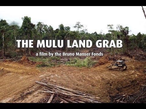 Zabírání půdy ve jménu palmového oleje