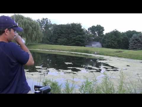 Pond Bass Fishing – Summer Weeds & Topwater Frogs