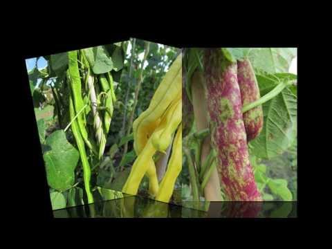 Le microorganisme végétal sur longle la tache verte
