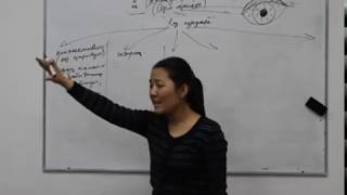 Несібелі МАХАТ. ҰБТ, биология, сезім мүшелері-анализаторлар
