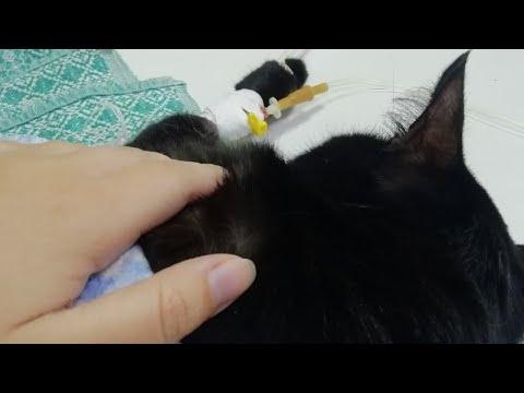 У нас заболел кот. Решила пообщаться.