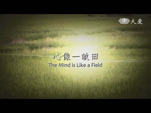 The Mind Is Like a Field