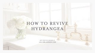 How to Revive Hyrangea   Bring Wilted Flowers and Droopy Hydrangea Back to Life