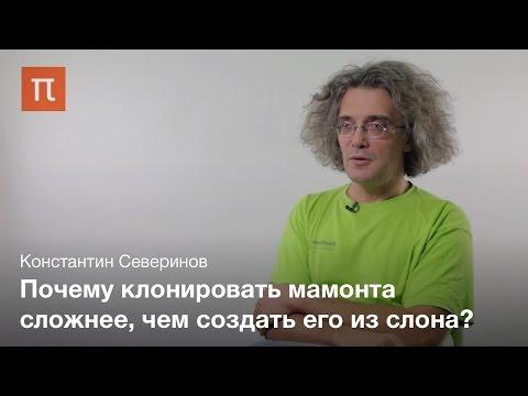 Технология клонирования животных — Константин Северинов