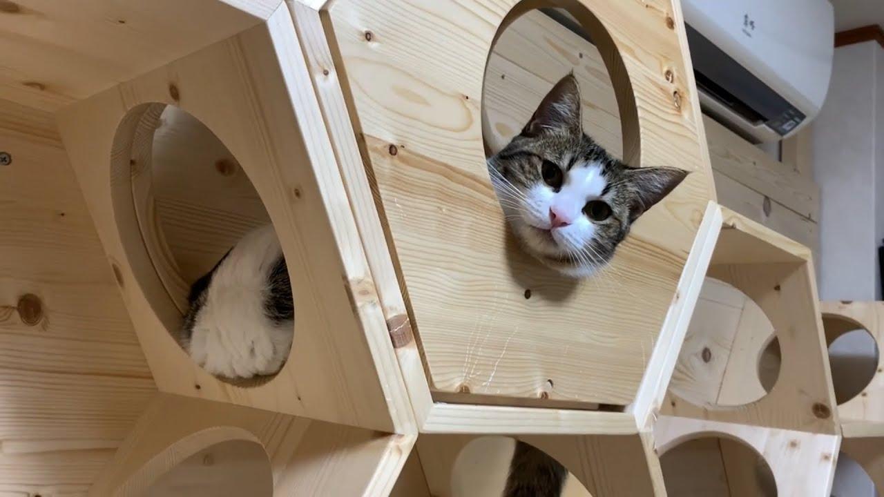 クスっと笑えるひのき猫短編集 Part11 #猫 #cat #クス #ひのき #短編