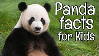 Panda Facts For Kids | Classroom Learning Video