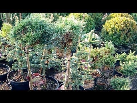 Как адаптировать редкие теплолюбивые растения