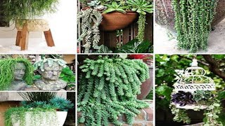 Beautiful Hanging Plants Ideas || Hanging Plants Outdoors Ideas