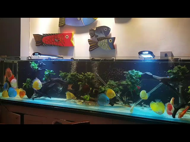 Gorgeous Set Up and Discus Collection ❤️ A new Video. Thanks to the Owner Nhung Dang ❤️