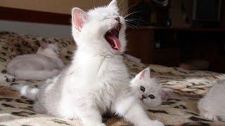Спорим, захочется завести котенка? Няшность этой подборки зашкаливает!