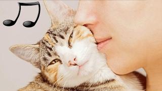 GATTI MUSICA: Musica Rilassante Per Gatti  per calmarsi il dormire animali domestici  🎵