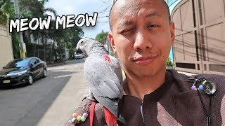"""My Talking Parrot Learns to """"MEOW"""" Like a Cat 