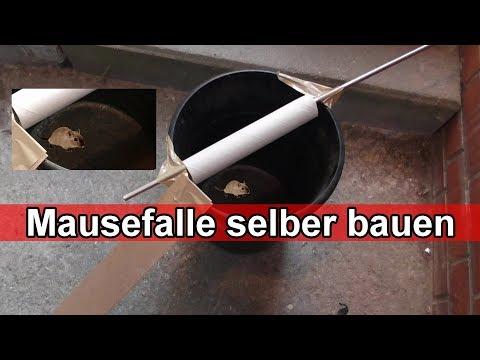 Mausefalle aus Eimer selber bauen – DIY lebend Mäusefalle selber machen - Anleitung