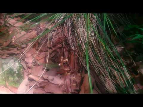 Orquídea???? La encontré viviendo en el suelo