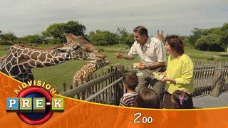 KidVision VPK Zoo Field Trip