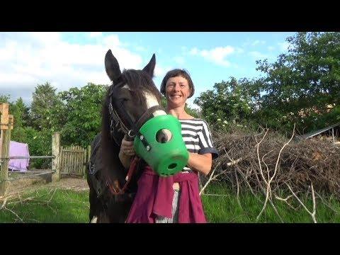 Weshalb unser Pferd einen grünen Eimer auf der Nase hat - als Fressbremse!