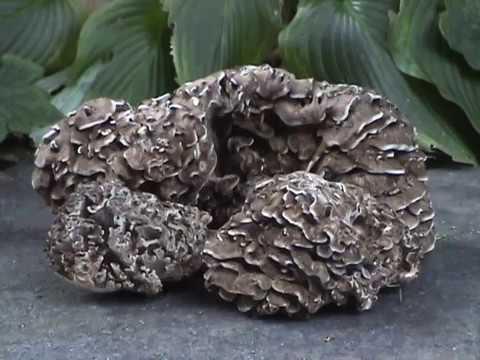 Das Rezept des Kefirs mit burjakom für die Abmagerung