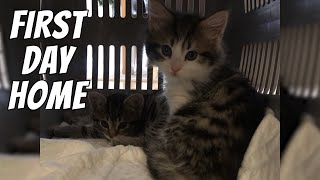 Bringing home new kittens | Kitten's first day home