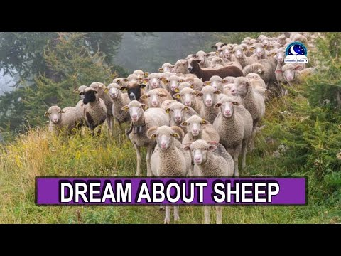 BIBLICAL MEANING OF SHEEP IN DREAM I Evangelist Joshua Dream Dictionary I