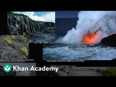 Ecological succession (video) | Ecology | Khan Academy