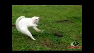Кошки и змеи!И другие ползучие)))!Нарезка приколов про котов.Супер видео!