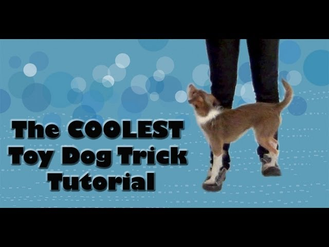 The COOLEST toy dog trick tutorial!