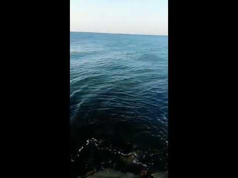 Aprire uno stagno pagato per pesca