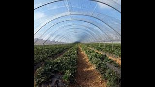 how-entrepreneurs-are-tapping-into-the-greenhouse-business