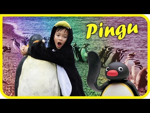 PINGU IN THE CITY, Aquarium of the Pacific Family and Kids Reviews - TigerBox HD