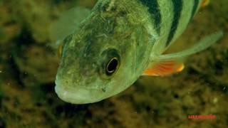 Карьеры рыбалка щелково