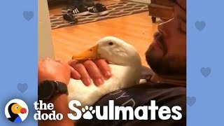 Ben Afquack The Duck Follows His Dad Everywhere   The Dodo Soulmates