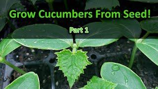 How To Grow Cucumbers Part 1 - Seeding!