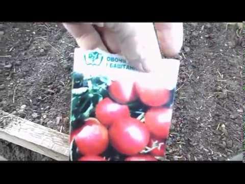 14 апреля. Посеял помидоры в парник, на рассаду.