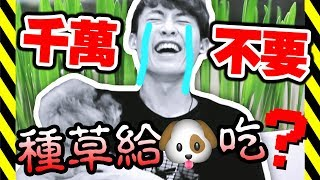 【大崩潰】⚠️千萬不要「種草」給狗狗吃!?MUFFIN的生日禮物🎁 (中字)