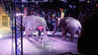 2018: A Year of Circus Cruelty