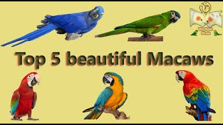 Top 5 beautiful Macaw Types & Info | India 2020 Price List | மக்கா வகைகள் | WinNest Birds | தமிழ்