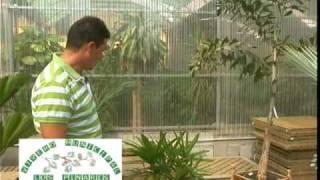 Palmeras para patios y balcones 2ª parte de 3
