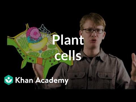 Plant cells (video) | Crash Course: Biology | Khan Academy