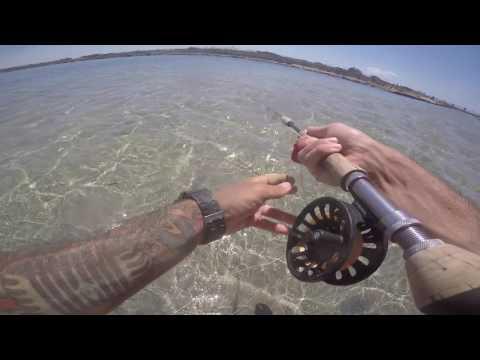 Scaricare un gioco i fishings russi a telefono