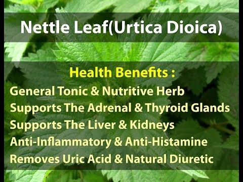 Video 5 Health Benefits Of Stinging Nettle Leaf Herb