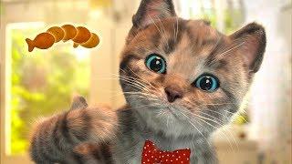 ПРИКЛЮЧЕНИЕ МАЛЕНЬКОГО КОТЕНКА / мультик про котика малыша с подарком конфет #ПУРУМЧАТА